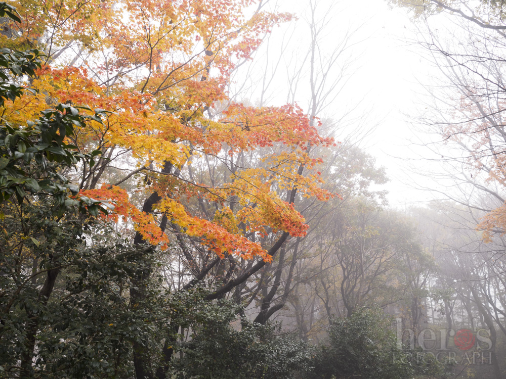 ふなばしアンデルセン公園_05
