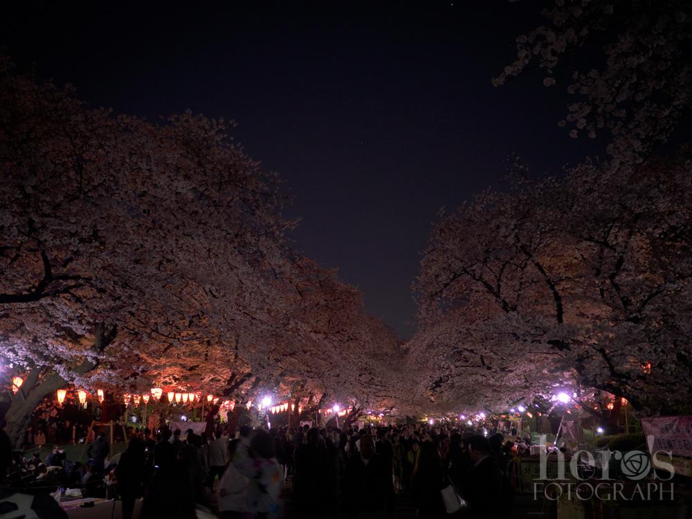 上野夜桜_02