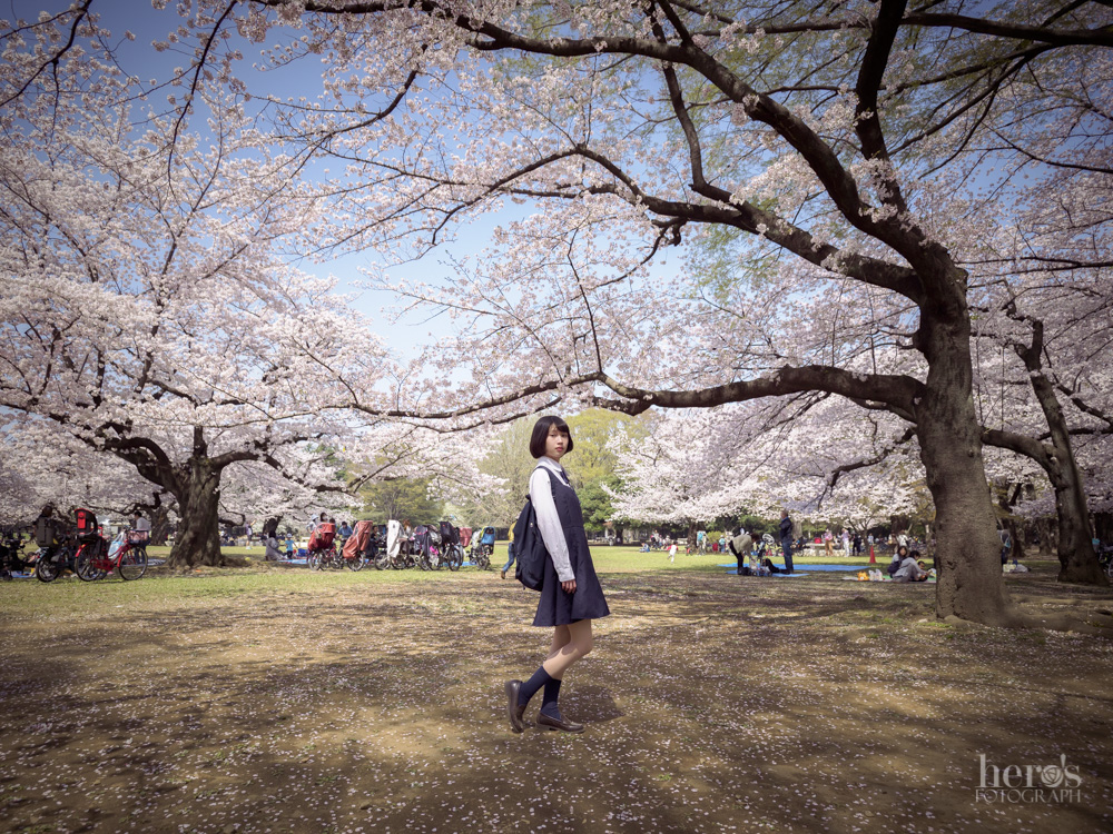 伊東みく_桜_06