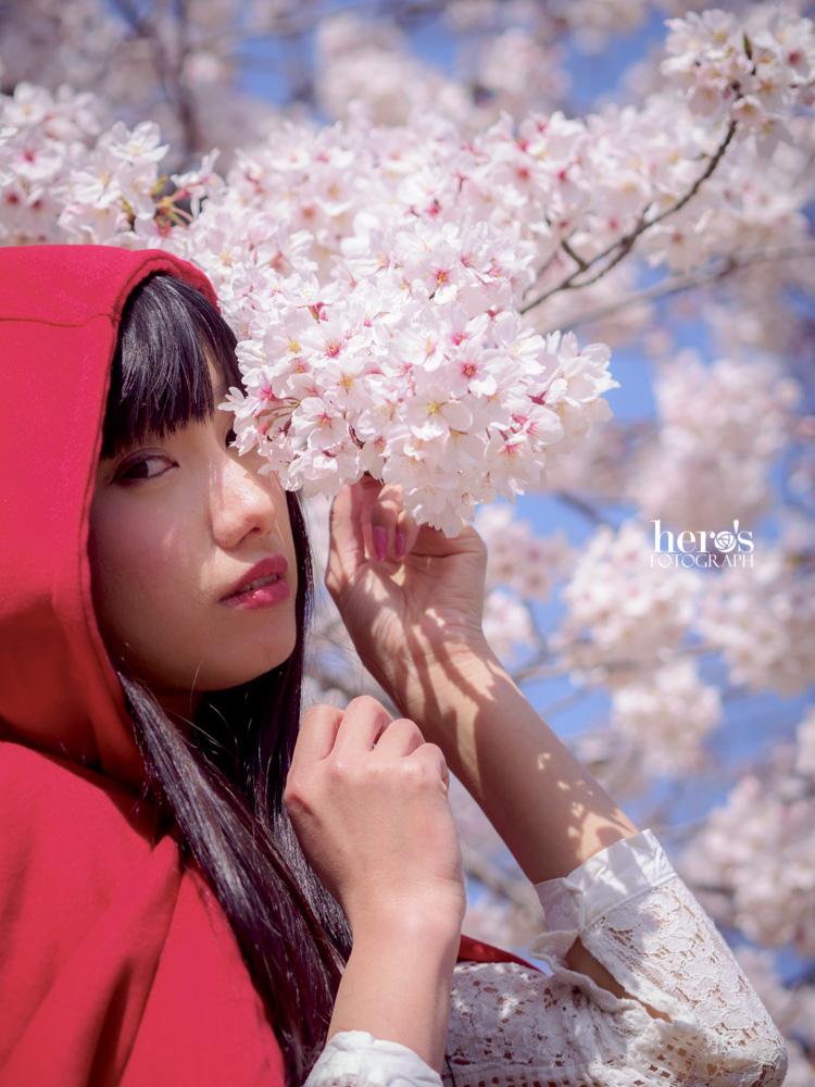 秋元るい_桜_13