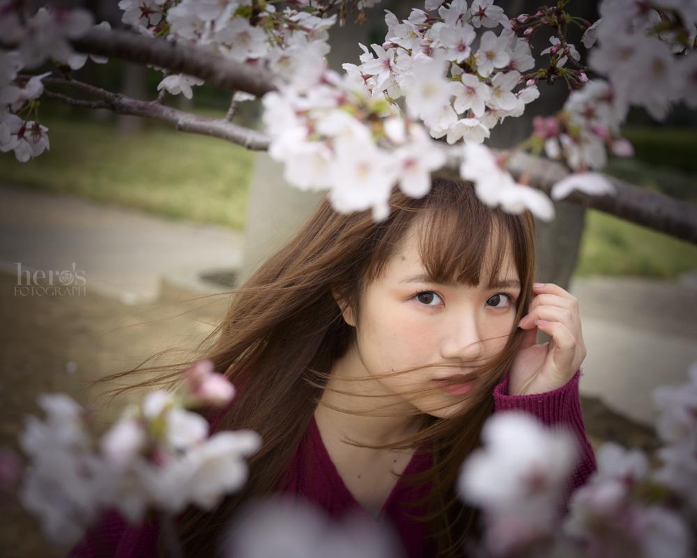 ざや_桜ポートレート_月島